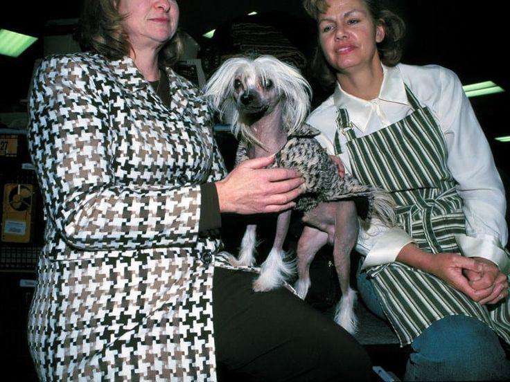 Estas fotos muestran el lado b de las exposiciones caninas