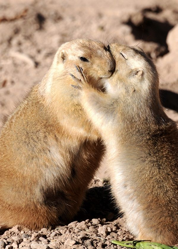 Animals Hug - Here we present the collection of 30 Lovely Animals Hug Each Other
