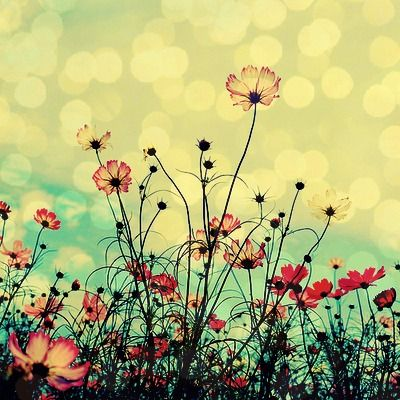 Pink Flower, Blue Sky, Nature, Beautiful, Cosmos, Poppies, Flower Fields, Into The Wild, Flower Photography