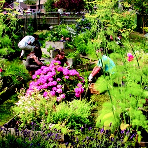 10 Best Images About Community Gardens On Pinterest Gardens Green Roofs And The Neighborhood