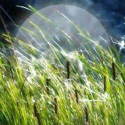 Luna delle erbe è quella di luglio