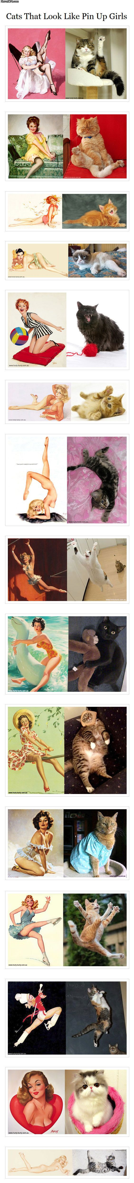 Cats and Pin Up Girls. The Pin-up culture is really obnoxious to