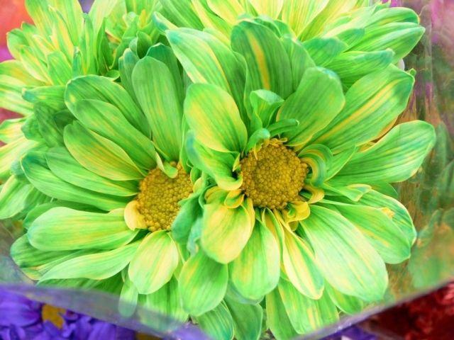 best hd flowers ideas on   lotus flowers, lotus, Beautiful flower
