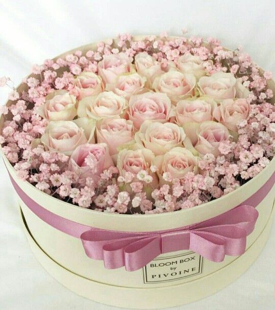 lila rosada