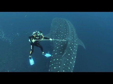 Best Marine Biology Images On   Marine Biology Jobs