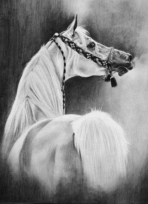 http://www.mariadangelo.com/imperialimdal.jpg #Arabians #Art