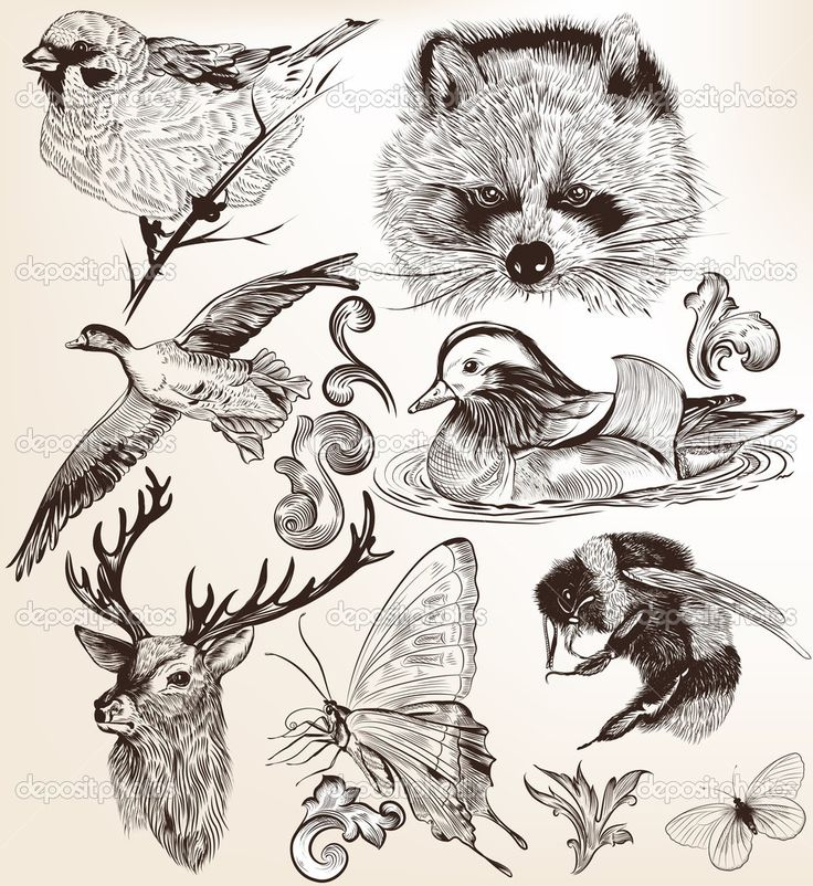 Download - Vector set of detailed hand drawn animals in vintage style — Stock Illustration #30094259