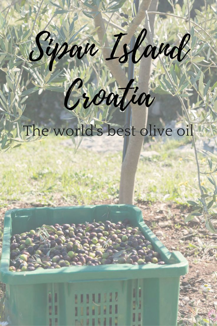 The best olive oil in the world? You can find it in Sipan Island, Croatia! Foodies take note!
