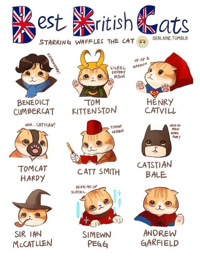 """This is sickeningly adorable - especially """"Tom Kittenston"""" as Loki,,,, lol ///// Best British cats"""