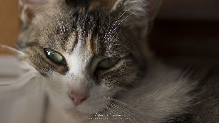 https://flic.kr/p/LTTu72 | Cat | Follow me  500px / Instagram / Twitter / Facebook / Google+  my website : becav.in   Hello, cat !  Canon 5D Mark III Canon 85mm F/1.2 L II USM 85mm / F1.4 / 1.125s / ISO 200  6 September 2016 5:20 PM GMT+1 Located country : France / city : Perpignan  Copyright Photography . 2016 . BECAVIN Edouard