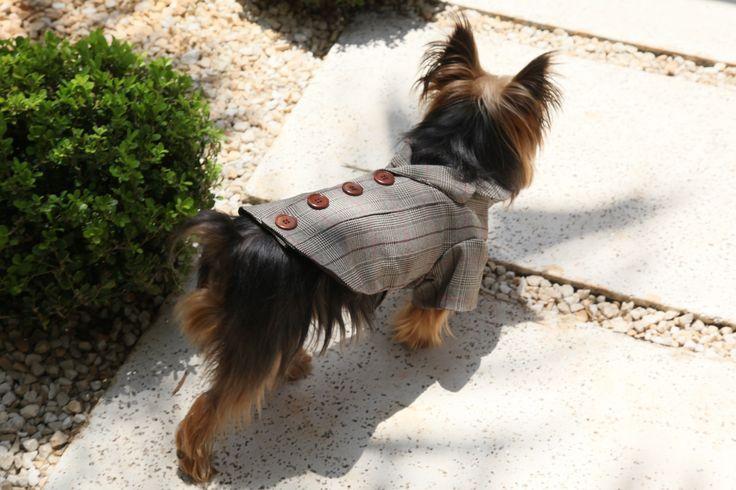 Casaco Sherlock Holmes #cute #pet #dog #roupapracachorro
