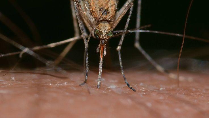 Het is een mooie zomeravond, je ligt in je bed en je hoort het irritante gezoem van een mug. Ga je achter de mug aan of trek je de deken over je hoofd, hopend dat de mug je niet prikt? Toch heeft niet iedereen last van muggenbulten. Sommige mensen lijken de dans altijd te ontspringen. Hoe komt het dat de één meer gestoken wordt dan de ander?  https://www.fit.nl/blog/mug-gebeten