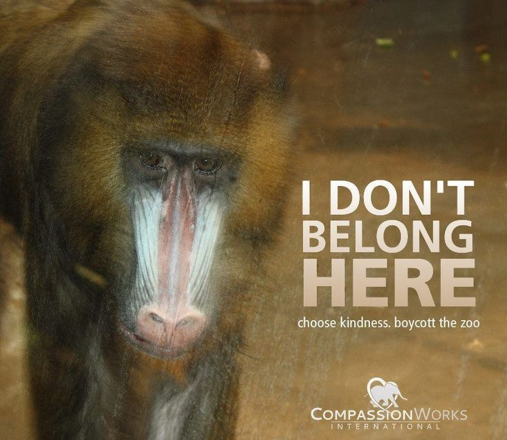Twitter  CompassionWorks Intl @CWIntl     Freedom is everyone's right -- even for non-human animals. Be kind. #BoycottTheZoo