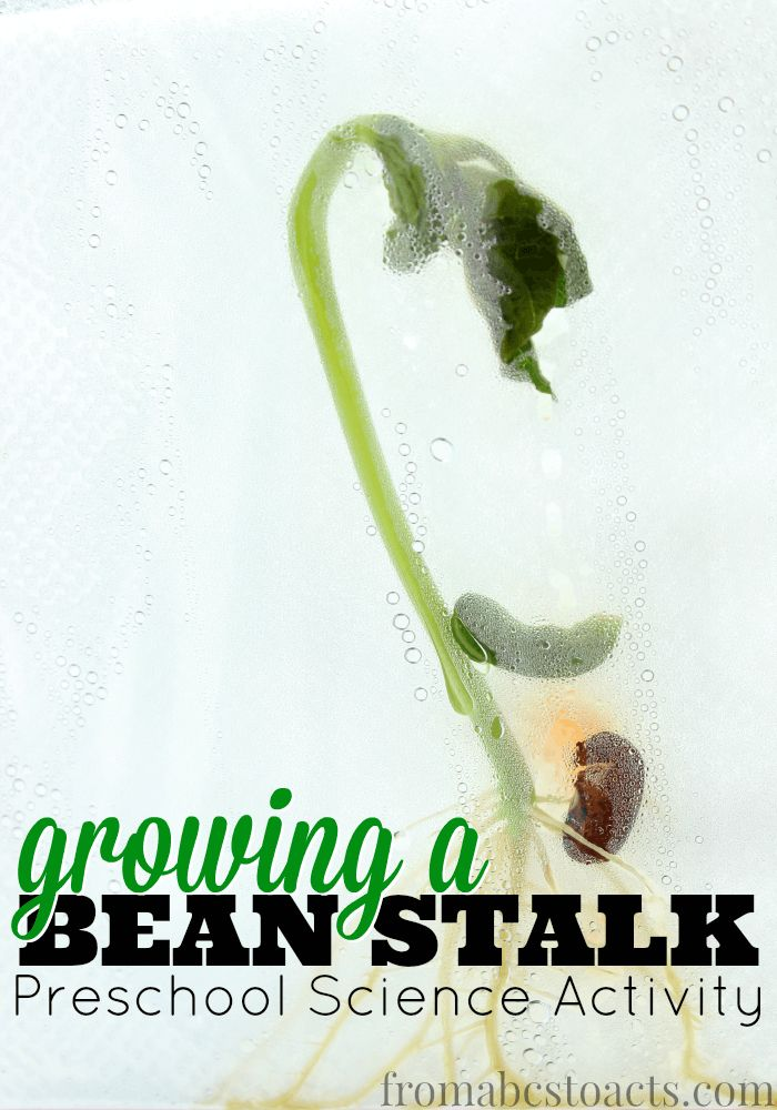 growing a beanstalk preschool science activity