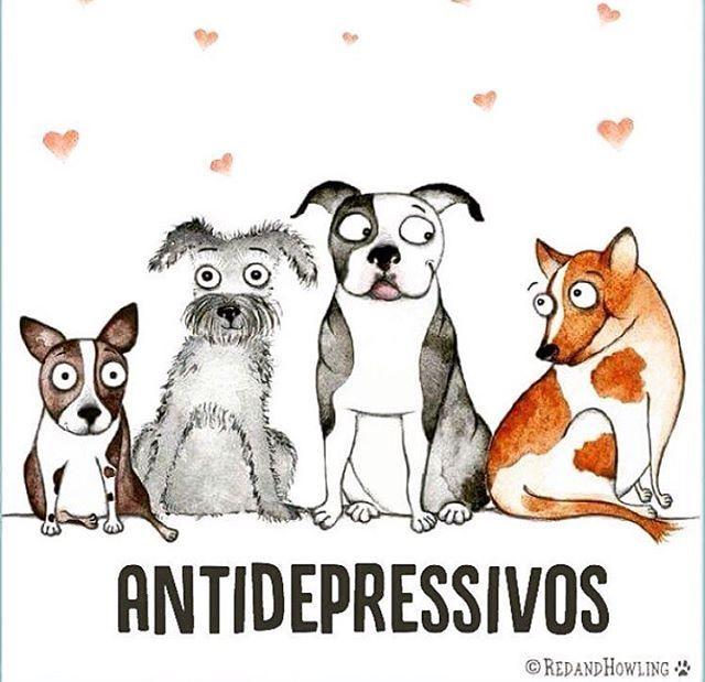 NOSSOS ANJINHOS! ❤❤❤ #cachorroétudodebom #amocachorro #petmeupet #filhode4patas #cachorro