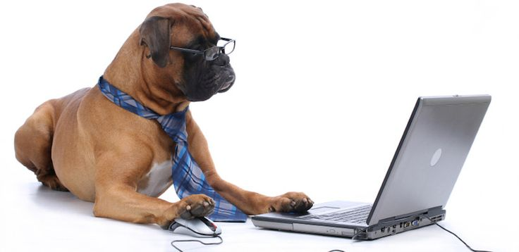 #Chic4Dog #news Social network a misura di animale. Scopri ora di che cosa si tratta nel blog di Chic4Dog: http://blog.chic4dog.com/2015/01/social-network-misura-di-peloso/