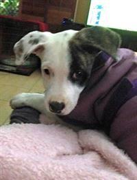 Sunshine Coast Animal Refuge | Dogs and Puppies