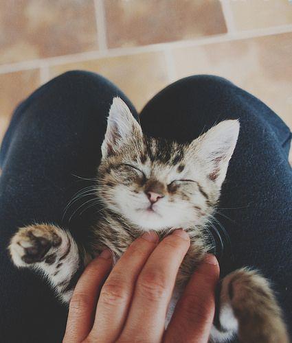 Kitty love. Sleepy snuggles.