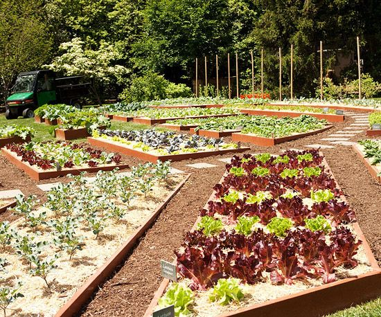 1000 Images About Above Ground Gardens On Pinterest Gardens Raised Planter Beds And Raised Beds