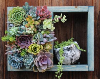 Framed Hanging Succulent Garden Ready To by SucculentWonderland