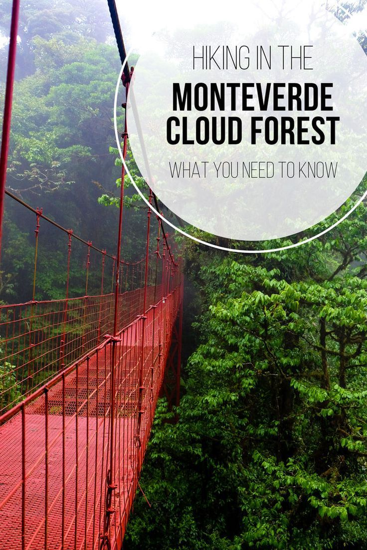 Interested in hiking at the Monteverde Cloud Forest Reserve? Don't want to pay for pricey group tours? Find out how you can do your own self-guided hike around the cloud forest and see all of the best spots (including the suspension bridge)!