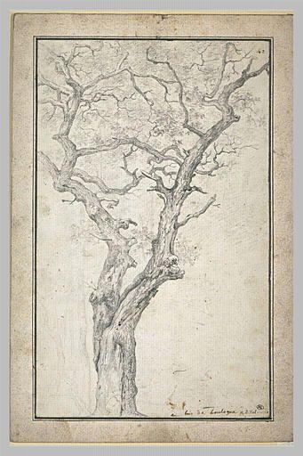 Pierre Henri de VALENCIENNES | Tronc et branches d'un arbre dans le bois de Boulogne