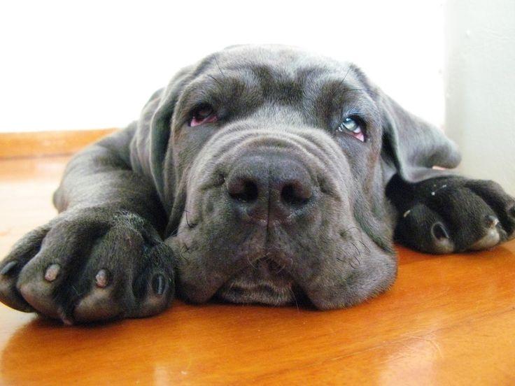 this little guy looks so sad.