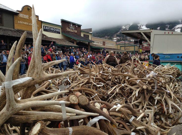 Elk Tracks: Elk Antlers Galore, Records Set at Boy Scout Antler Auction