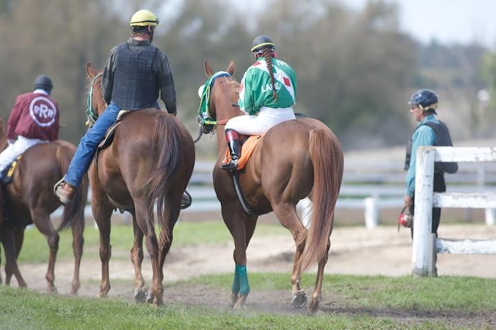 Horse Racing Industry Transition Panel Interim Report  (Photo Courtesy David Landry)