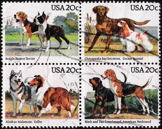 Собаки бигль винтажные открытки: 3 тыс изображений найдено в Яндекс.Картинках