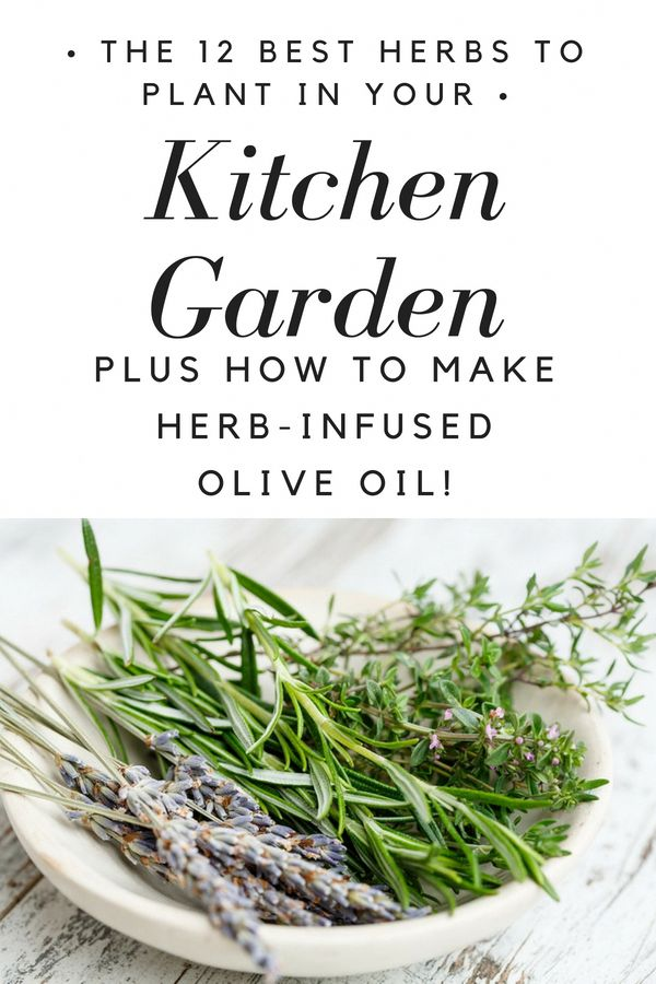 The 12 Best Herbs to Grow in Your Kitchen Garden + How to Make Herb-Infused Olive Oils – Looks Like Happy