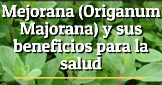 Hierba mejorana - Origanum Majorana - beneficios para la salud