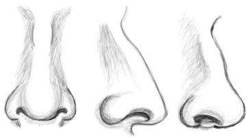 Learn how to draw noses as they are seen from the front, in profile, and in 3/4 view.