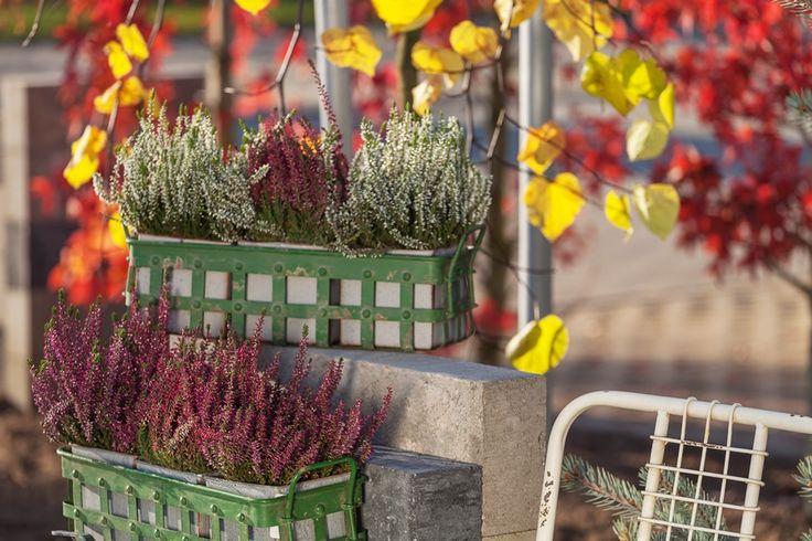 osłonki do kwiatów złota jesień - http://www.sodo.pl/