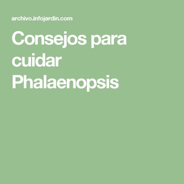 Consejos para cuidar Phalaenopsis