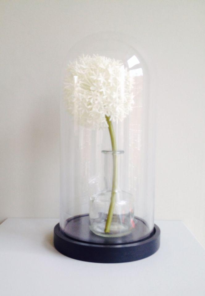 Glazen stolp met bloem