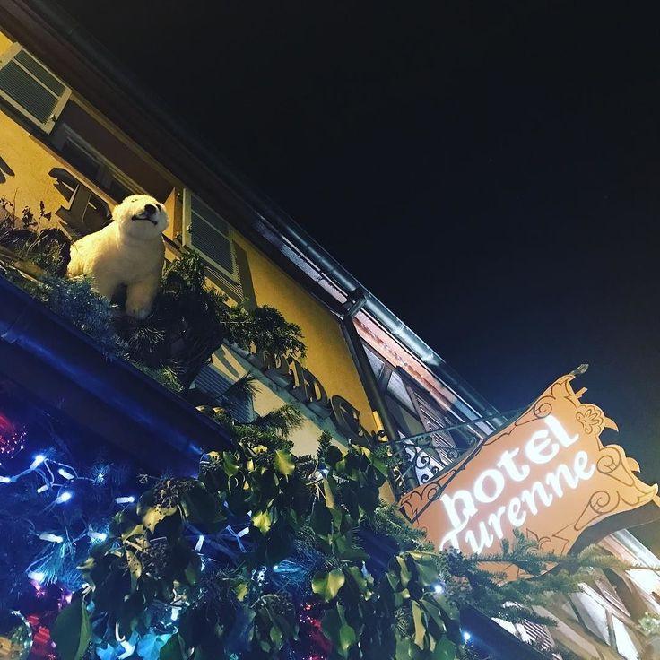 При входе в мой отель меня встречает Умка  На самом деле  во Франции  очень популярны белые медведи   #travel #франция #кольмар #ноябрь #путешествие #france #colmar #november #рождество #christmas #weinachtsmarkt #vanoce