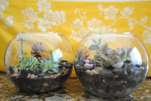 Succulent terrarium. These would make great gifts for house warming, new office, teachers etc.