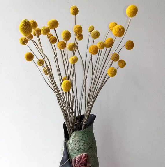 Dried Real Natural Craspedia Flowersbilly Button Etsy Billy Buttons Valentines Flowers Diy Bouquet