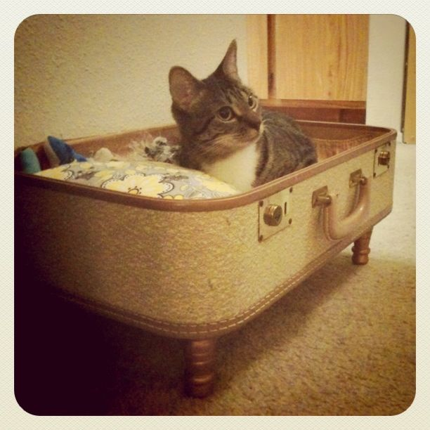 17 Best Images About Homemade Cat Dog Beds On Pinterest