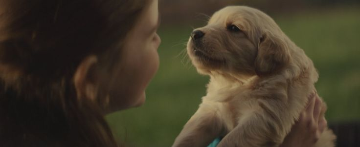 chevy commercial - the best friend for lives journey