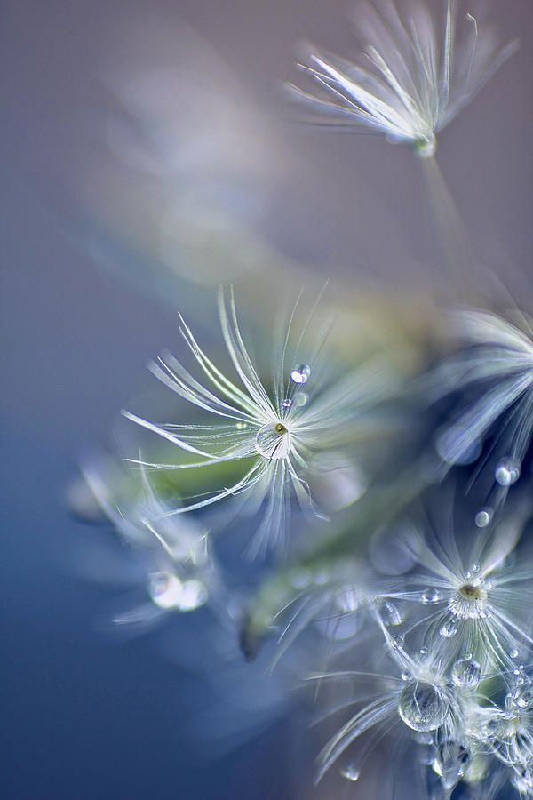 droplets . seed heads . blue ✿