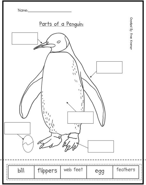 Free Parts of a Penguin Worksheet