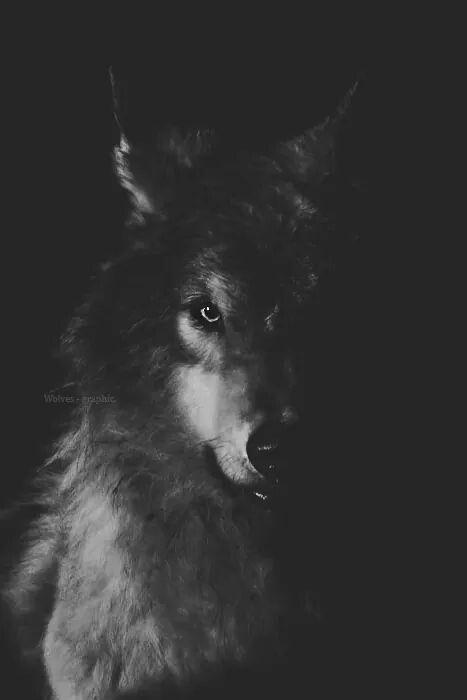 картинки werewolf