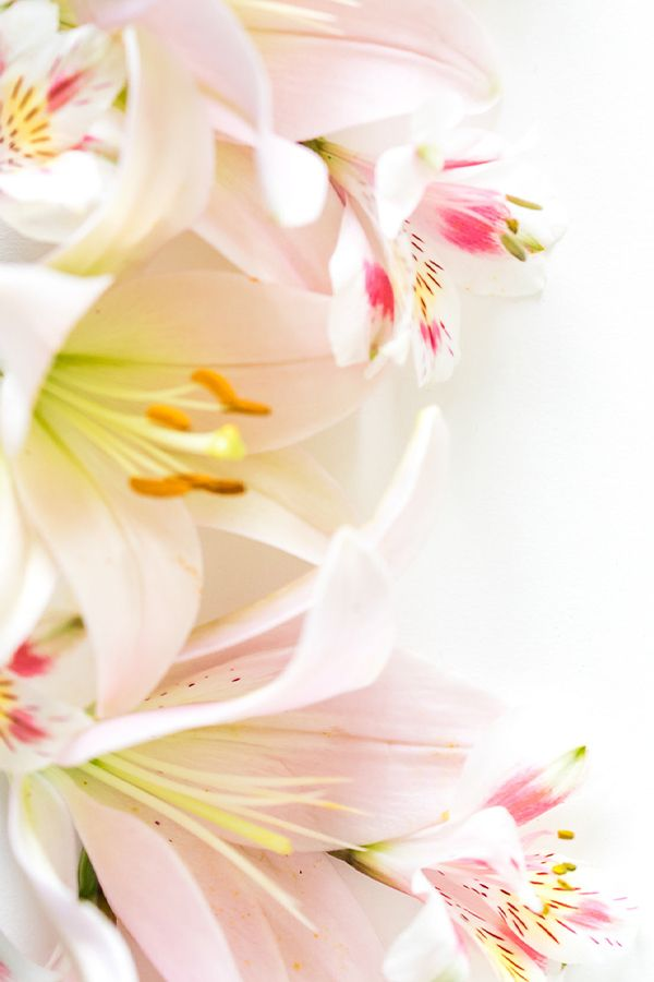Stunning Pink Lilies At From You Flowers Lily Wallpaper Flowers Pink Lily Wallpaper Lilies Wallpaper Coolest lily flower wallpaper images