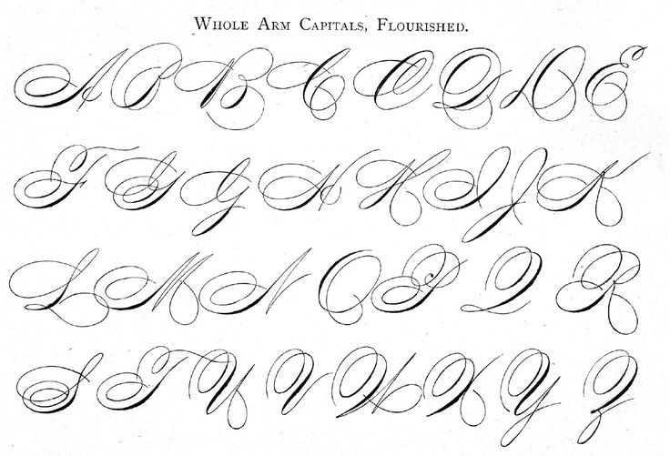 Whole arm cursive capitals flourished from ames guide