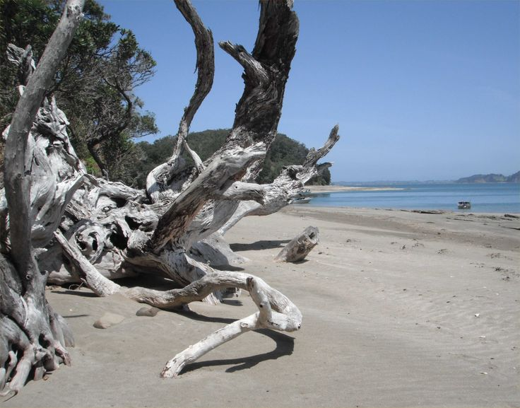 Te Haupa (Saddle Island), Hauraki Gulf