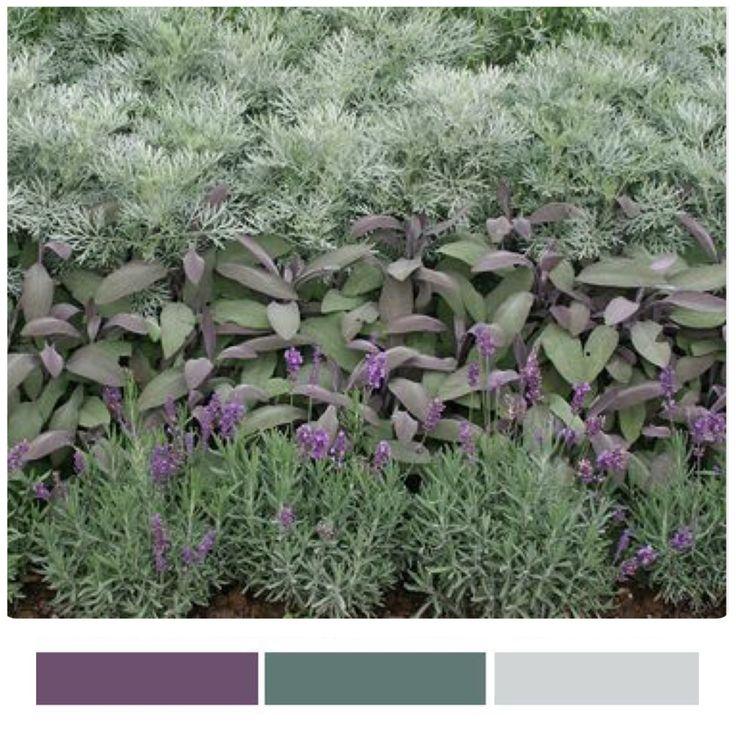 Lavender, tri-color sage, artemesia