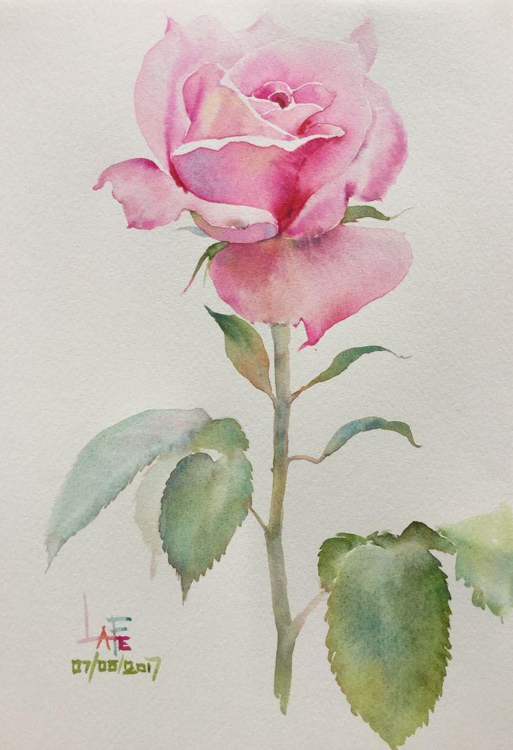 Нарисовать розу акварелью фото