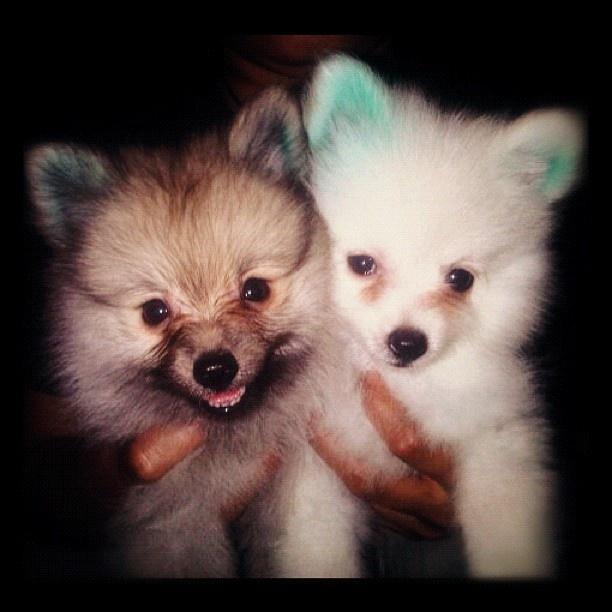 Bruno & Brandon